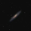 NGC253 - Sculptor Galaxy,                                Stefan Nebl