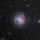 M83 southern pinwheel galaxy,                                Giovanni Paglioli