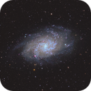 Messier 33 Triangulum or Pinwheel Galaxy,                                Anthony Quintile