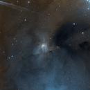 IC4603 Reflection Nebula in Ophiuchius ,                                David Nguyen