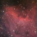 Pelican nebula,                                Máximo Bustamante