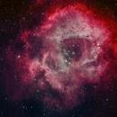 Rose Nebula,                                Dan Kordella