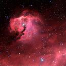 Head of the Seagull Nebula (IC2177) HaRGB,                                Sebastiano Recupero