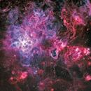 NGC2070 Tarantula Nebula in HOO,                                johnnywang
