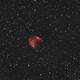 Medusa Nebula,                                Bruce Donzanti