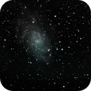 M33 in dual band,                                Tom Gray