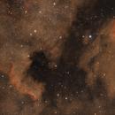 NGC7000 - North America nebula,                                Tom914