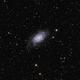 NGC 2403 - A galaxy in Camelopardalis in LRGB,                                Daniel.P