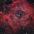 Rosette nebula,                                Valerio Pardi