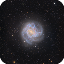 M83 - NGC 5823 - the magnificent Southern Spiral Galaxy,                                Niall MacNeill