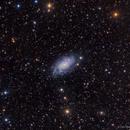 NGC 2403,                                Leo Shatz