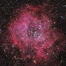 Caldwell 49, the Rosette Nebula,                                Nikkolai Davenport