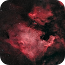 NGC7000 & IC5070 | North America and The Pelican,                                Tom Hitchen