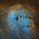 tadpoles - no stars,                                pfile