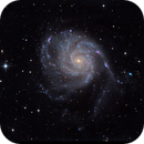 M101 with Newt,                                Ron Crouch