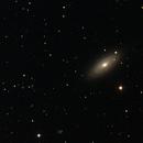 NGC 2841,                                Robin Clark - EAA imager