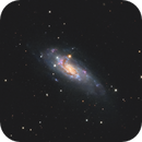 NGC 4559 / Caldwell 36 / Koi Fish Galaxy,                                Chris Sullivan