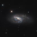 M66 - Spiral Galaxy,                                Derryk
