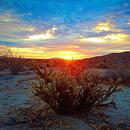 Desert Sunrise,                                Jim Matzger