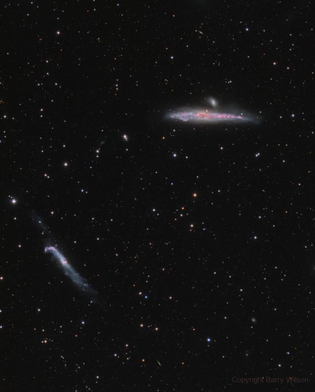 Starburst galaxy, NGC 4631 The Whale Galaxy & The Hockey Stick,                                Barry Wilson