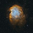 NGC 2174 - Monkey Head Nebula,                                Monkeybird747