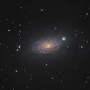 M63 Sunflower Galaxy,                                Rolf Dietrich