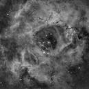 Rosette Nebula - NGC2237 C49,                                Wirrkopf