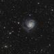 M101, Pinwheel galaxy,                                Jeff Signorelli