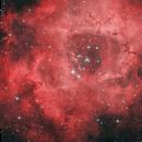 NGC 2239, NGC 2244, NGC 2246 - The Rosette Nebula,                                Randy Roy