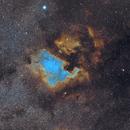 NGC 7000 widefield (Bicolor),                                U-ranus