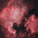 North America and Pelican Nebula,                                Leonidas