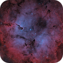 IC 1396,                                Brian Peterson