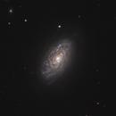 NGC 4414,                                Gary Imm