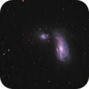 NGC4490, a LRGB picture,                                  Niels V. Christensen