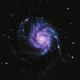 M101,                                Andrew Gutierrez