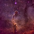 Elephant's Trunk nebula (IC1396; Sh2-131) OTT processing!,                                Pam Whitfield