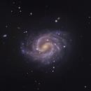 NGC 4535 The Lost Galaxy,                                Shannon Calvert