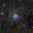 NGC 7023,                                Tim Gillespie