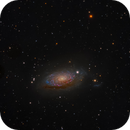 Sunflower Galaxy -- Messier 63,                                Miles Zhou