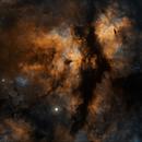Cygnus Aureus,                                rayp