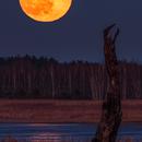 Full Moon 27/02/2021,                                Łukasz Żak