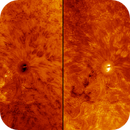 Sunspot AR2768 - Two Panel - Colorized and Inverted,                                Eric Coles (coles44)