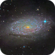 Sunflower Galaxy (Messier 63),                                Miles Zhou