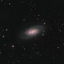 NGC2903 - Barred Spiral in Leo,                                Dave Boddington