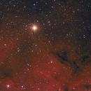 Herschel's Garnet Star,                                Kathy Walker
