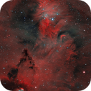 Cone Nebula, Christmas Tree Cluster, and Fox Fur Nebula (NGC 2264 region),                                Gary Lopez