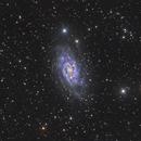 NGC2403 - LRGB,                                Martin Dufour