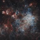 Tarantula Nebula (NGC 2070),                                Christian Vial Arce