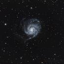 M101,                                Terry
