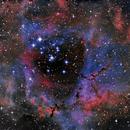 Rosett Nebula,                                Tiago Ramires Domezi